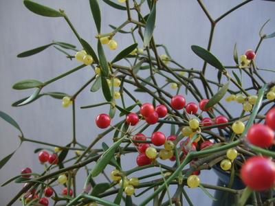 オークリーフ(クリスマスの花束)_f0049672_11132121.jpg