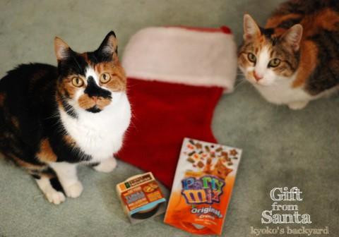 猫たちへのささやかなクリスマスギフト_b0253205_38118.jpg