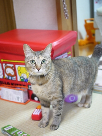 猫のお友だち うたちゃんマチルダちゃん編。_a0143140_17495491.jpg