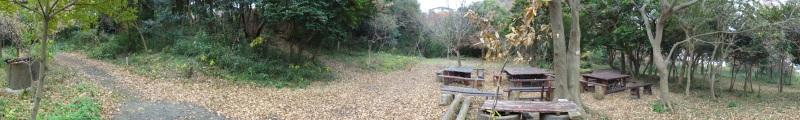 小雨降の中で作業続行・・・うみべの森を育てる会今年最後の定例活動日_c0108460_17433710.jpg