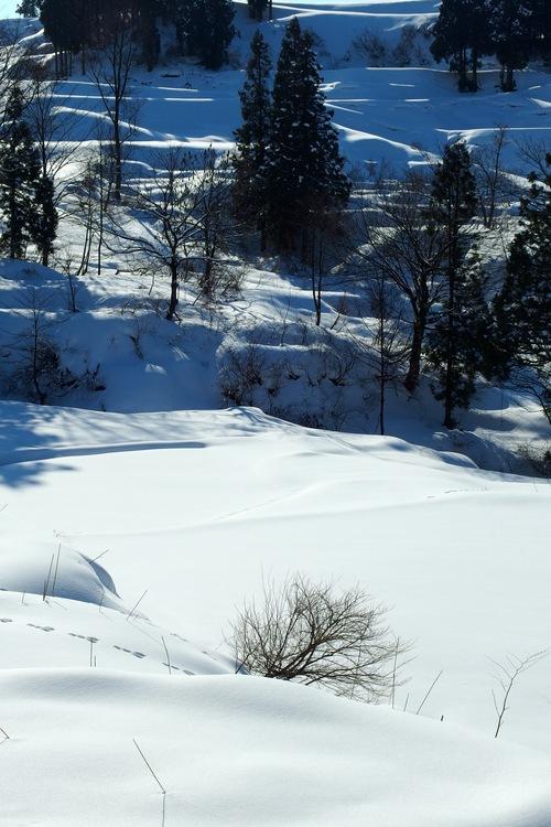 雪の棚田_a0025576_8341014.jpg