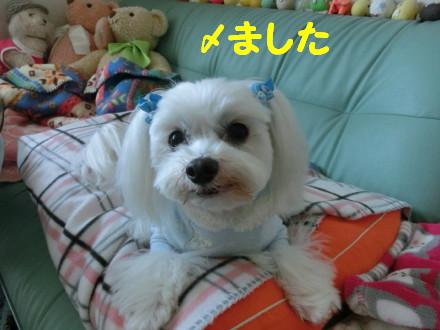 b0193480_11564384.jpg