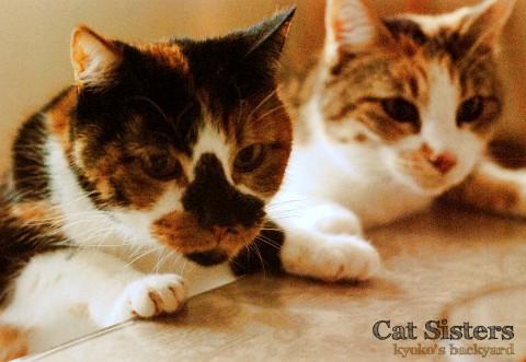 シンクロで狙う姉妹猫_b0253205_224498.jpg