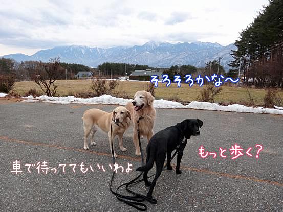 長い散歩_f0064906_1547296.jpg