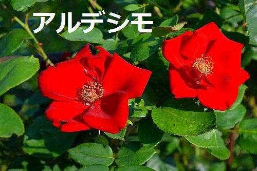 d0172010_6505441.jpg