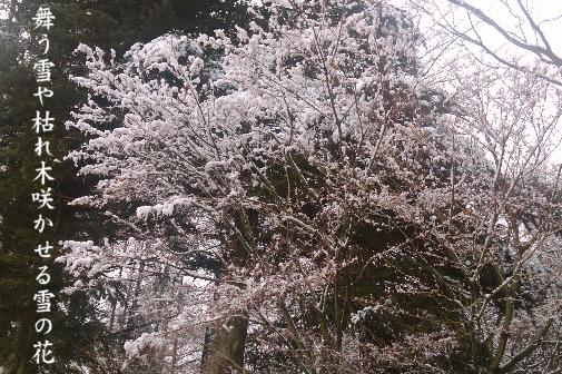 雪の花_e0099713_22454991.jpg