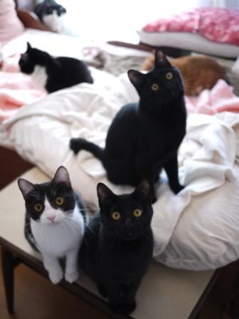 お家に立ち寄ったら猫 空しぇるらぃらぎゃぉすてぃぁらみるきぃ編。_a0143140_21562862.jpg