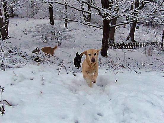 また雪だぁ~♪_f0064906_16101629.jpg