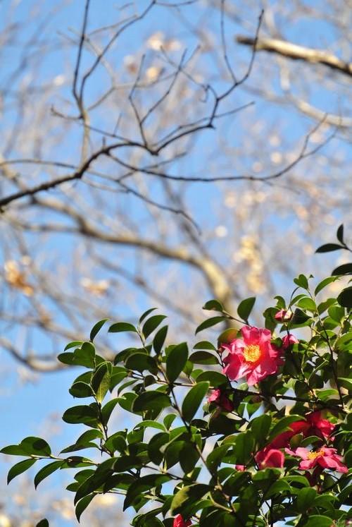 サイクリング&冬の花_e0089232_13594951.jpg