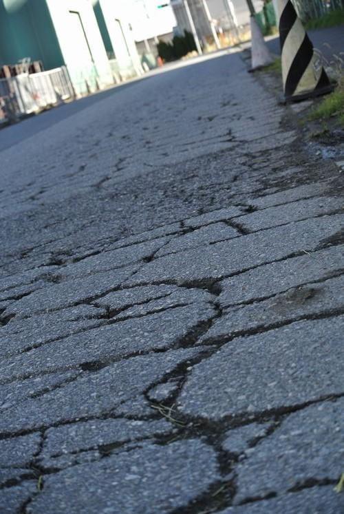 サイクリング&冬の花_e0089232_14014675.jpg