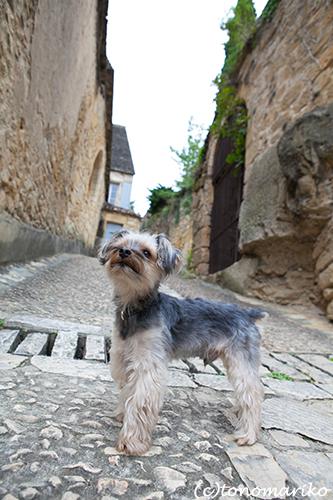 フランス、イヌとの暮らし_c0024345_2312168.jpg