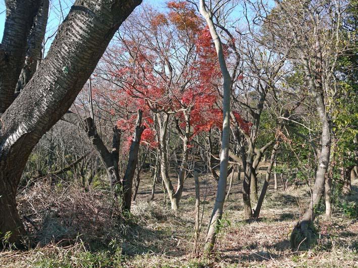 今年最後の六国見山森林公園の定例手入れ:13・12・21_c0014967_834933.jpg