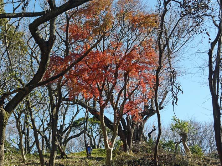今年最後の六国見山森林公園の定例手入れ:13・12・21_c0014967_841920.jpg