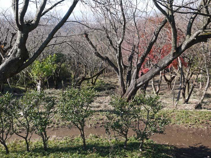 今年最後の六国見山森林公園の定例手入れ:13・12・21_c0014967_89367.jpg
