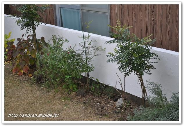 コンクリートブロック塀を何とかしたい・・・ その3_c0176271_2335195.jpg