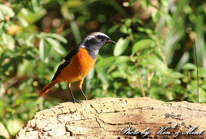 のんびりと地元で鳥撮り ♪_e0218518_23105773.jpg