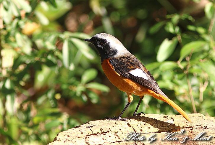 のんびりと地元で鳥撮り ♪_e0218518_23112365.jpg