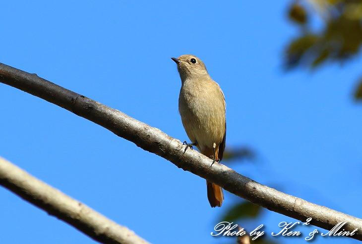 のんびりと地元で鳥撮り ♪_e0218518_23114132.jpg