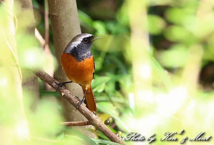 のんびりと地元で鳥撮り ♪_e0218518_2311716.jpg