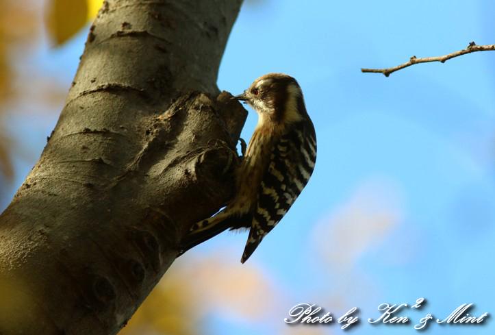 のんびりと地元で鳥撮り ♪_e0218518_2312304.jpg