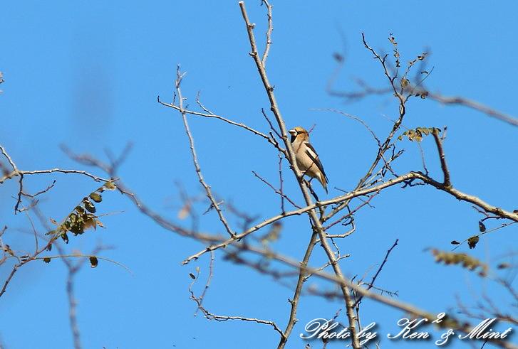 のんびりと地元で鳥撮り ♪_e0218518_2312948.jpg