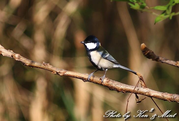 のんびりと地元で鳥撮り ♪_e0218518_23192169.jpg
