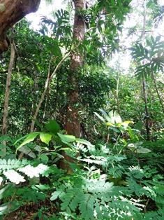 森の宝石_a0043520_1245259.jpg