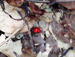森の宝石_a0043520_1245959.jpg