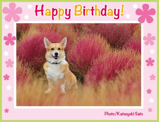 ネスタちゃん、お誕生日おめでとう♪_d0102523_10221382.jpg