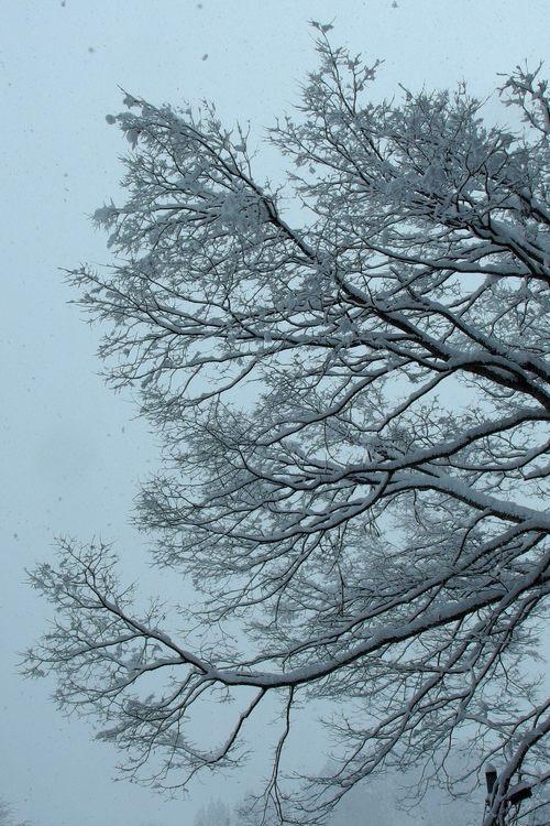 雪の情景_a0025576_163842.jpg
