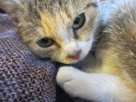 今日も眠たい猫?!_b0187479_15364318.jpg