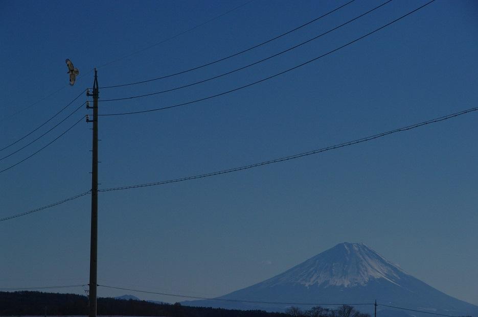 ノスリの富士 ~信濃路冨嶽百景その25~_f0163491_19151551.jpg