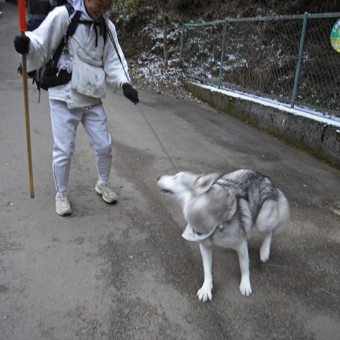 Memory of the second pilgrimage with husky HANA II_c0049299_19405123.jpg