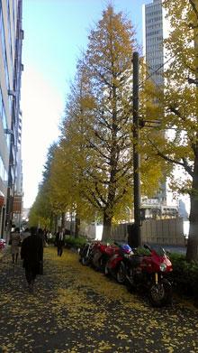 六本木通りのイチョウがついに落葉_a0000006_016880.jpg