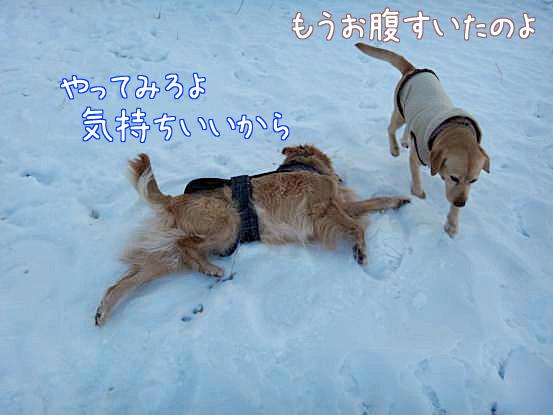 五郎のこだわり_f0064906_1631179.jpg