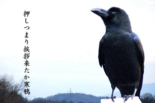 寒鴉_e0099713_055813.jpg