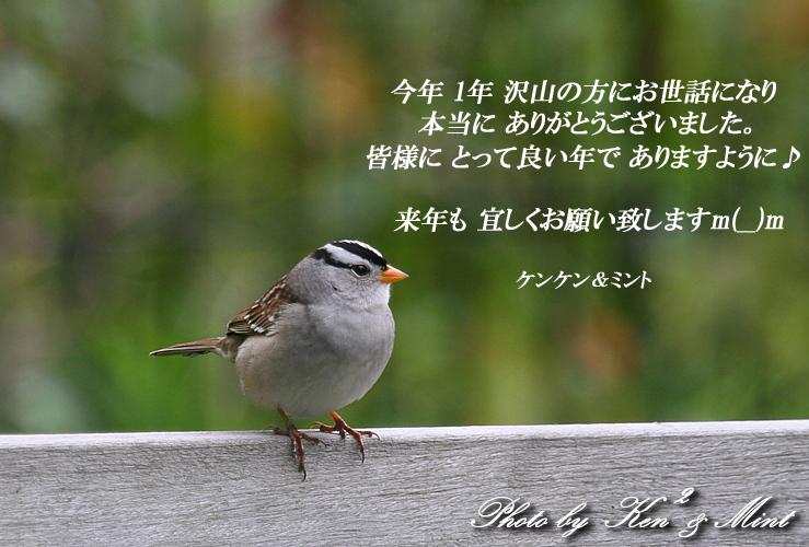 良い お年を お迎え下さい~♪ (^0^)_e0218518_21195148.jpg