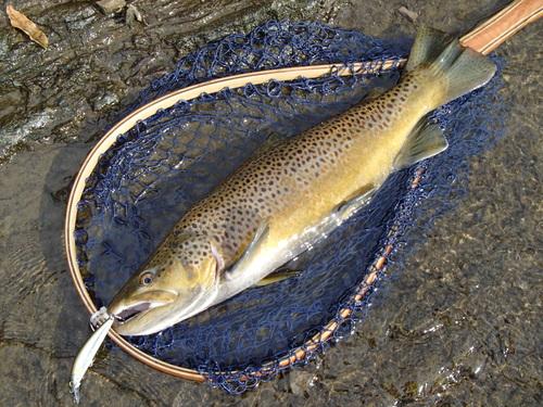・Fishing Dialy_a0165135_18483766.jpg