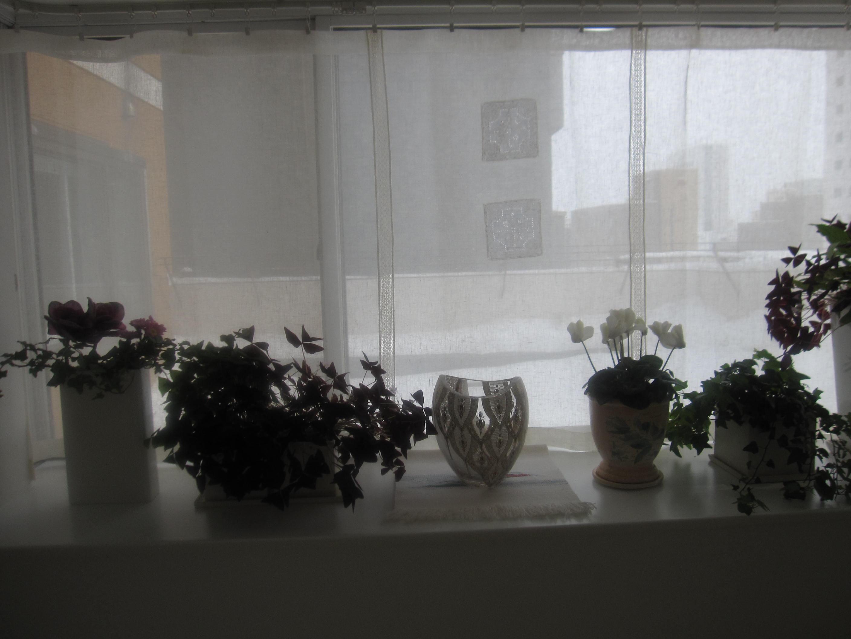 お正月に間に合ったカーテンと豚の角煮_a0279743_1752822.jpg