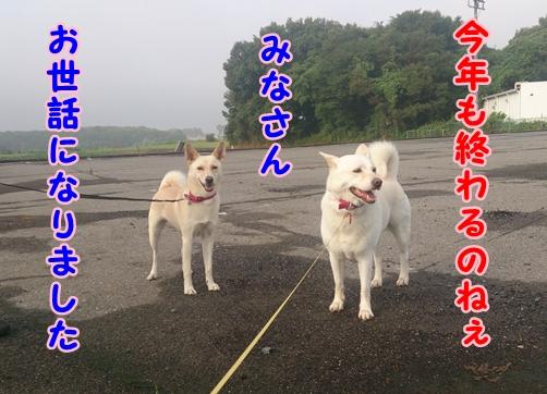 f0195543_21453589.jpg