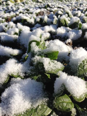 雪と霜ばしら_d0245357_183447.jpg
