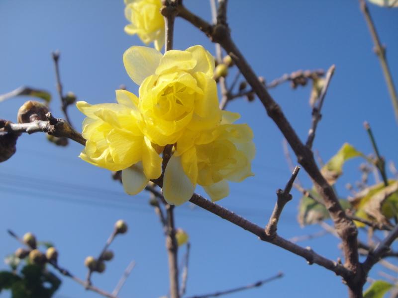小春日和は外へ出る_c0108460_00522592.jpg