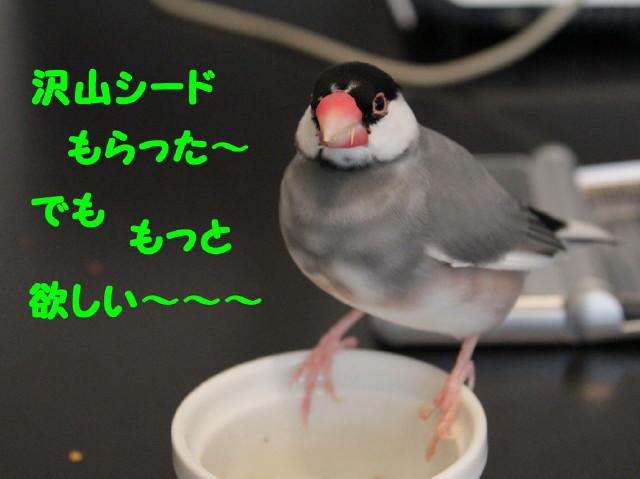 b0158061_2281630.jpg