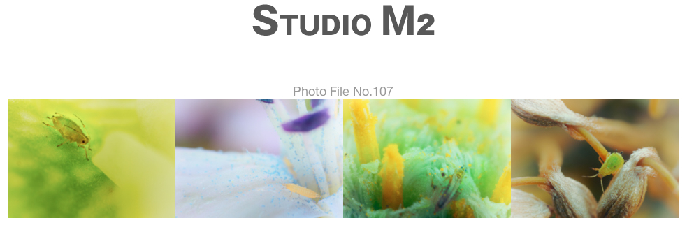 STUDIO M2 Photo File No.107「お邪魔虫」_a0002672_1120866.jpg