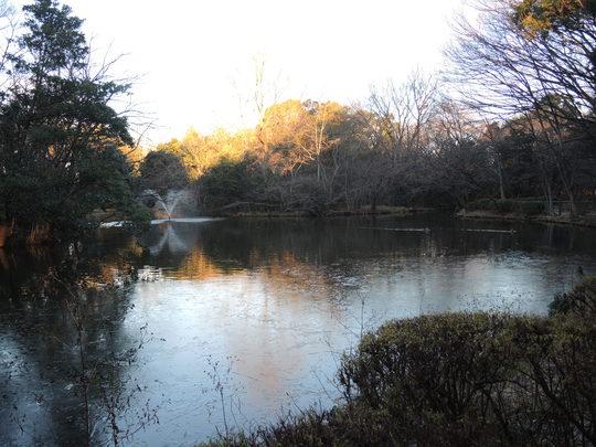 和田堀公園の池に氷が張りました_e0232277_1147635.jpg
