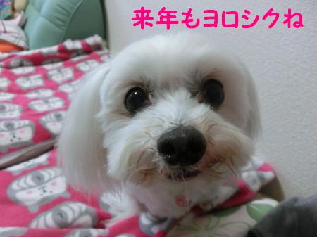 b0193480_1041562.jpg