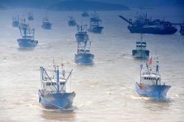 日中韓3カ国共同で、東シナ海に海洋牧場の建設を―中国紙_b0064113_221141100.jpg