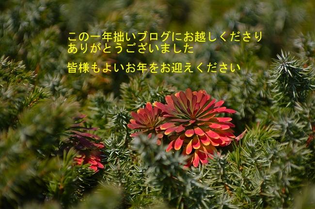 c0047422_15500114.jpg