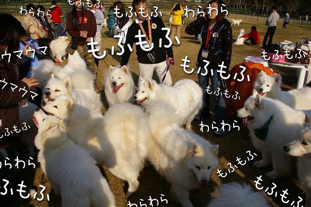♪ 東京モフモフボーイ ♪_c0062832_791367.jpg