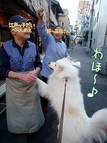 ♪ 東京モフモフボーイ ♪_c0062832_791712.jpg